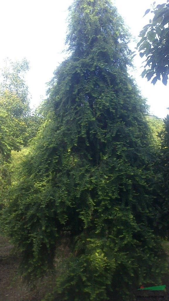 中国苗木求信息